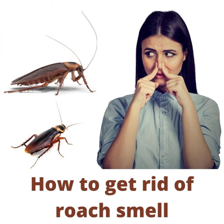 How to get rid of roach smell